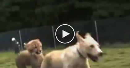 Watch The Reaction When This Cheetah Cub Is With His New Doggy Friend… OMG.