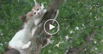 Daredevil Kitten Finds Himself In Most Unlikely Place, But Then… Now Watch What Mommy Does