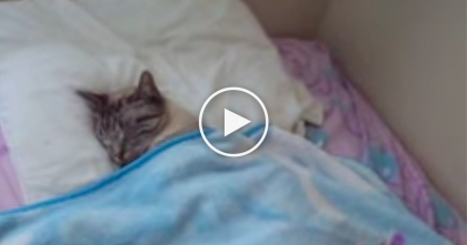 He Walked Into His Bedroom, But What He Saw Next?  TOO Cute For Words, Awwww!!