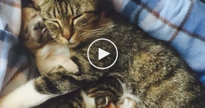 His Mom Died, But Then He Was Introduced To A Cat Mom. Now Watch The Response…