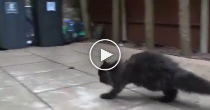 It Looks Like A Normal Cat, But Keep Watching… You Won't Believe What This Cat Does!