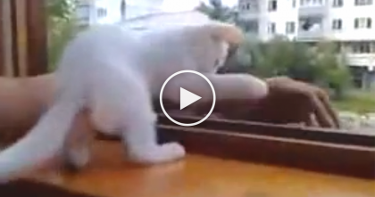 Just Watch What Happens When This Kitten Notices His Arm Outside The Window