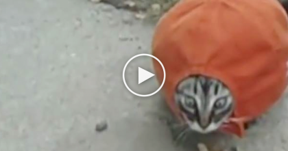 Kitten Finds Hat But WATCH What Happens When They Step Inside It….OMG How Cute!