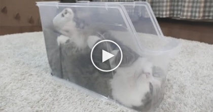 Cat Finds His Favorite Place To Sleep, You Won't Believe Your Eyes When You See Where… LOL?!