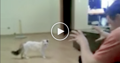 Man Tries To Scare Cat, But What The Kitty Does To Him Next?… I Didn't Expect That!