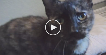 Poor Kitty Was Moments Away From Being Euthanized… Now Watch What They Did Next!