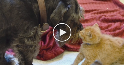 See What This Rescue Dog Does For A Kitten With Infected Eyes, It's Just Amazing, WOW.