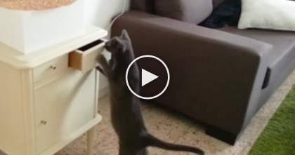 She Puts The Toy Away, But Keep Watching To See What Happens Next… At 0:14, Whoa!