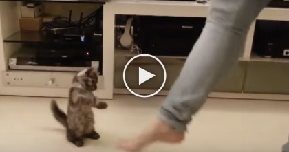 She Taps Her Foot To The Music, But Watch What Little Kitten Does… It's Just TOO Cute!