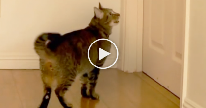 This Cat Wakes Up His Owner, But Keep Watching Till The End… Oh My GOODNESS.