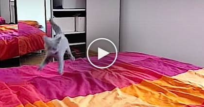 Tiny Little Kitten SOO Excited About The Bed, He Just Can't Contain Himself… SOO funny!!