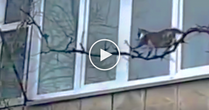 VIDEO: Cat Starts Climbing A Tree, But If You Keep Watching…The Results Are Shocking, Omg!