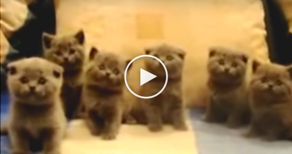 Watch These Kittens Dancing, Their Moves Will Melt Your Heart… SOO Much Cuteness!!