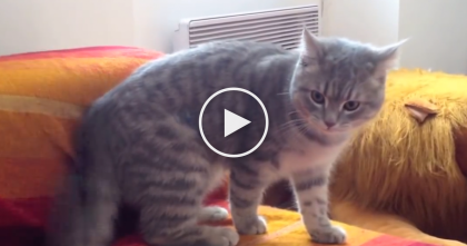 Watch What This Ninja Somersaulting Cat Does When He Gets Off The Couch… OMG!!