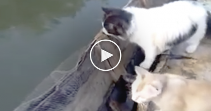 When He Goes Fishing, He Brings His Cats Along, Now WATCH What Happens