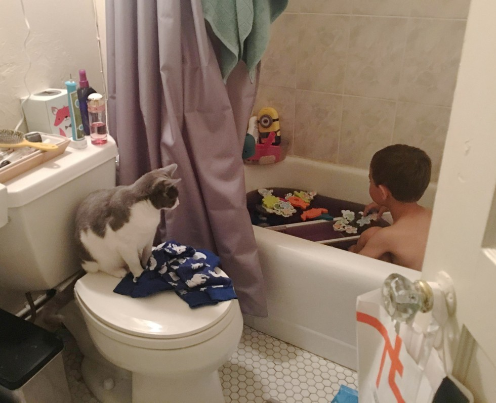 5_Cat_Watches_Boy_in_Tub