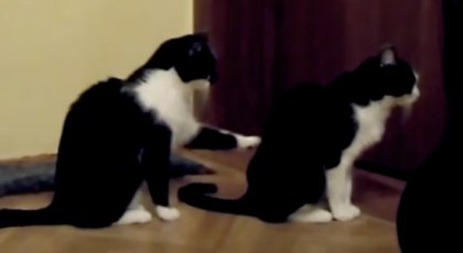 Cat Trying To Apologize To His Friend Finally Gives Up…But The Ending? It's Totally Unexpected, LOL!