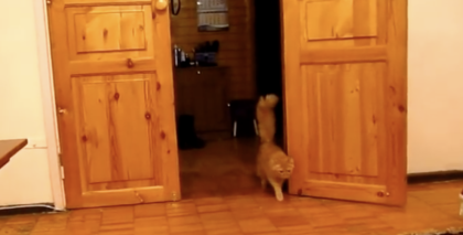 He Turns Up The Volume, But Keep Watching When This Cat Walks In… OMG, His Reaction Is Hilarious!!