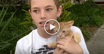 Boy Heard Meowing Coming From Car, But When He Tries To Rescue The Kitten…Listen Closely!