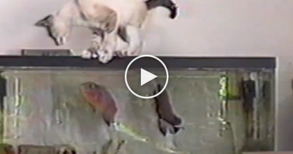 Cat Is Curious And Tries To Get A Better Look, But A Few Seconds Later… OMG, Just Watch!