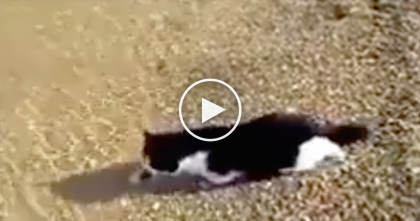 Cat Sees Owners In The Water, But What They See Happen Next… You Won't Believe Your Eyes!