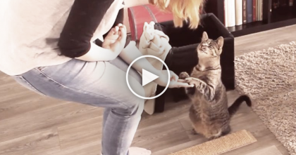 He Does Everything Just Like A Normal Cat, But WATCH And You'll See How He's Different… Amazing!