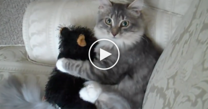 He Gave His Kitty A Stuffed Teddy Bear, Now Watch What She's Doing… Oh My Goodness, LOL!!