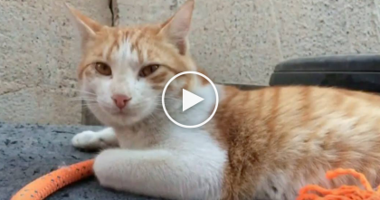 He Rescued A Stray Kitten During War, But Then…What You're About To See Next, It's AMAZING