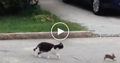 He Saw A Cat Just About To Kill A Bunny, But Then… Watch Till The End, Sweetest Thing EVER.
