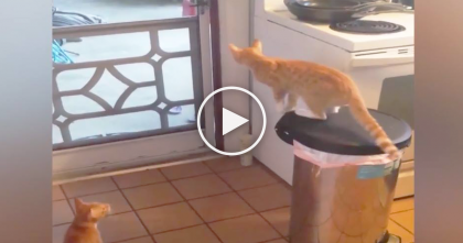 Kitty Climbs On The Trash Can, But Keep Your Eyes On Kitchen Door… Now Watch What He Does…