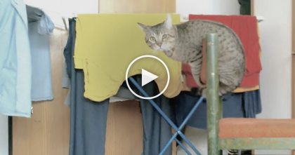 Kitty Climbs Onto A Chair, But When He Starts Moving? Now Just Watch His Tail…Omg!