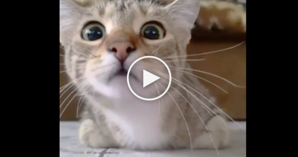 Kitty Is Watching A Scary Movie, But It's His Eyes You'll Want To See…Get Ready For It, LOL