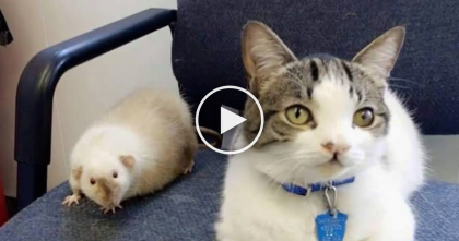 Kitty Notices Hurt Animals At The Shelter, But What He Does Next For Them?? This Is Amazing!