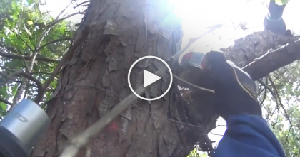 Kitty Was Stuck In Tree For Over 11 Full Days, Now Watch The Heroic Rescue… WOW…