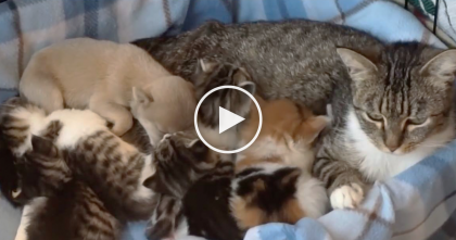 She's Snuggling Her Kittens, But When You Look Closer? It's Not What You Think, OMG…