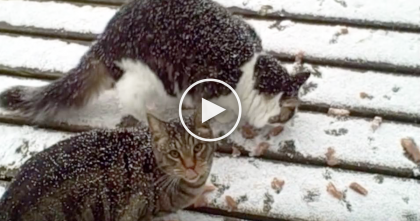 She Feeds Her Cats Tuna, But When An Unexpected Visitor Shows Up? It's Not What You Think…