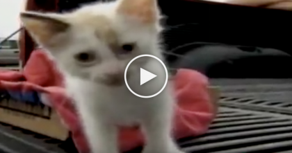 She Saw A Bag Thrown Out A Car Window, But When She Saw What's Inside… Now I'm In Tears.