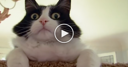 She's Addicted To Her Cat, But Not The Way You Think… OMG, You've Gotta Be Kidding Me?!