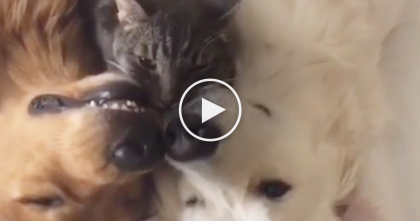 Two Doggies Find A Snuggle Buddy, But When You See Them Together… SOO Adorable!
