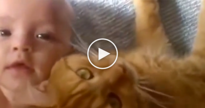 They Put This Kitty Next To The Baby, What They Recorded Next… It's Just TOO Darn Cute!