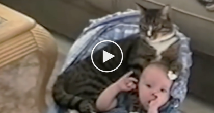 They Walked Into The Room, But Watch What The Cat Is Doing With The Baby… My Heart Melted