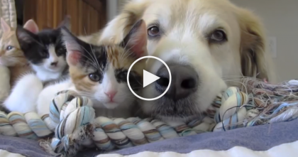 This Dog Sees The Kittens, But Keep Watching Till The End… The Results Are Just ADORABLE