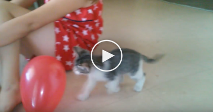 Tiny Kitten Discovers A Balloon For The First Time, But The Results… Too Cute For WORDS!!