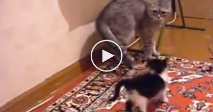 Tiny Little Kitten Confronts Larger Cat, But When You See The Reaction…It's Just TOO Funny!!