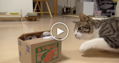 Cat Discovers Something Stuck In A Box, But When He Tries To Figure It Out…LOL, This Is SOO funny!!