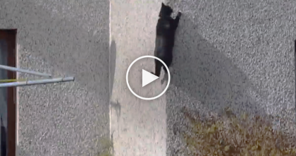 Cat Jumps Off A Chair, But What You See Next… I Can't Believe What They Recorded, WOW.