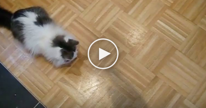 Cat Notices A Strange Shadow, But When He Goes Over To Check It Out? OMG… Hilarious!!