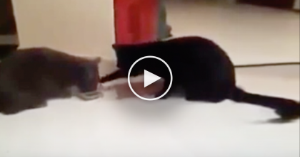 They Were Eating Some Food, But Then They Started Arguing… The Results Are Hilarious, LOL.