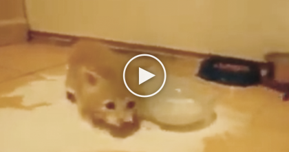 Ginger Kitten Discovers Some Milk For The First Time… Now Watch His Reaction, NEVER Expected That!