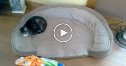 He Walked In The Room To Find The Cat, But What He Finds Instead??  OMG, This Is TOO Funny!!